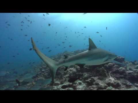 President of Palau Johnson Toribiong Speaks on Protecting Sharks