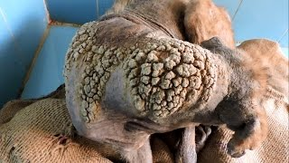 Transformation of dog with skin like barnacles