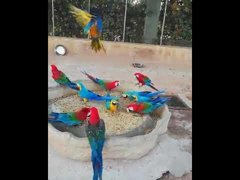 Maccaw Beautiful Birds