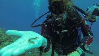 Tecnología aplicada a la biología marina - futuris