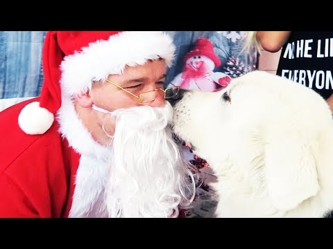 DOG MEETS SANTA FOR THE FIRST TIME - (Super Cooper Sunday #172)