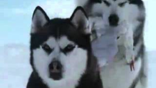 Белый плен (кадры из фильма)