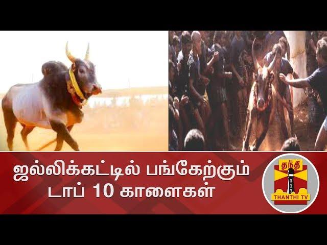 ஜல்லிக்கட்டில் பங்கேற்கும் டாப் 10 காளைகள் | Jallikattu | TOP 10 | Thanthi TV