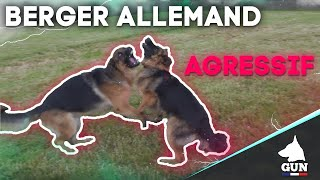 BERGER ALLEMAND AGRESSIF & IMPREVISIBLE