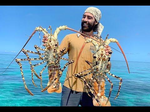 MONSTER LOBSTER |  Wrangled on the Great Barrier Reef Australia (B2B: EP 13)