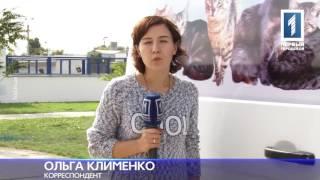 С первого ноября в Одессе начнут контролировать численность бездомных кошек