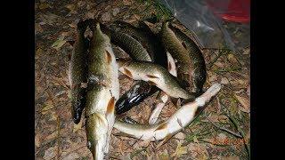 Ночная подводная охота 26.09.19 на реке Пьяна