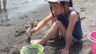 東扇島東公園の中にある かわさきの浜での潮干狩りと四葉のクローバー探...