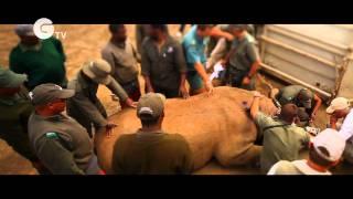 WWF Flying Rhinos