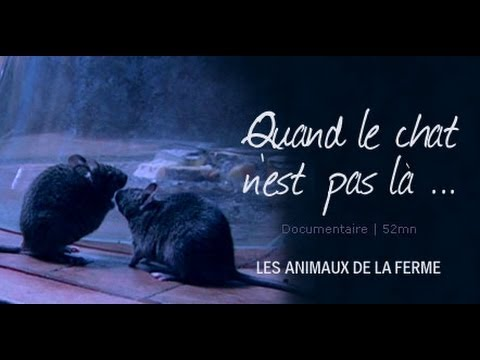 Quand le chat n'est pas là... - film documentaire animalier