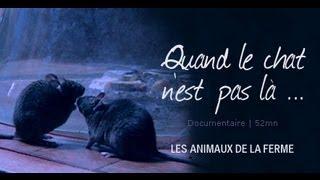 Quand le chat n'est pas là... - film documentaire animalier