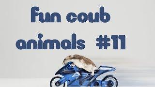 FUN coub animls #11  / видеоприколы / coub 2018 / животные / смешные животные / приколы 2018 / cube