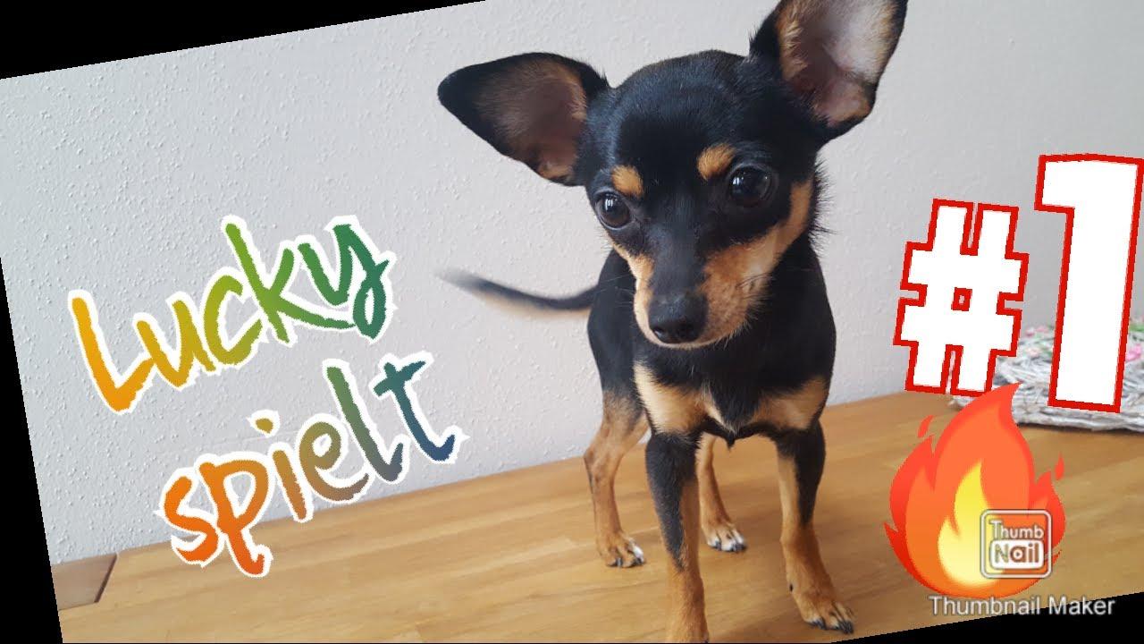 Herunterladen Hintergrundbild 4k Pudel Welpen Haustiere Hunde