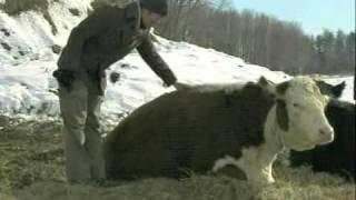 Animal Welfare Approved Stuart Family Farm