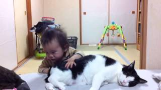 伝い歩きができるようになった息子とその全てに動じない猫たち。 赤ちゃ...