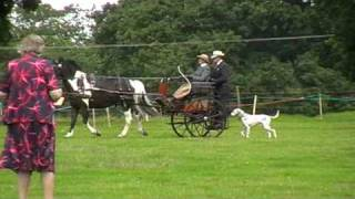 Maggie Gallop drives cones with a Dalmatian carriage dog, Helmingham Hall