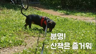 짜튜브tv [#닥스훈트] 오랜만에 나온 산책