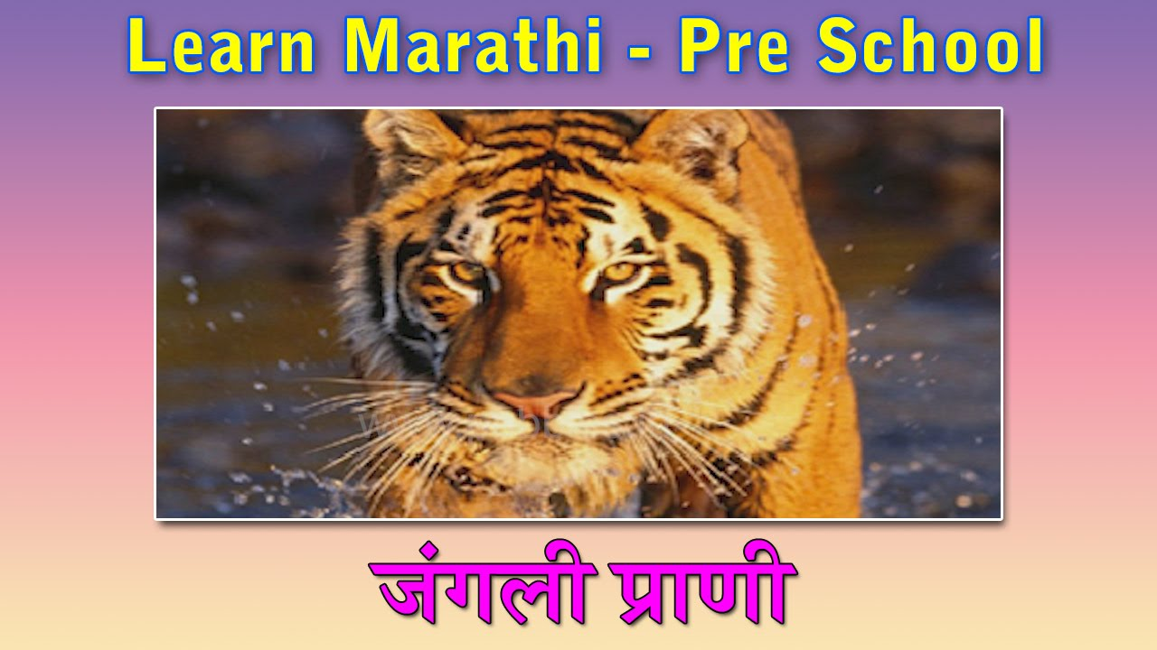 Wild Animals In Marathi | Learn Marathi For Kids | Marathi Grammar | Marathi For Beginners