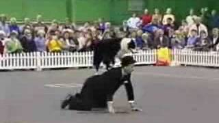 Freestyle Dog Dancing