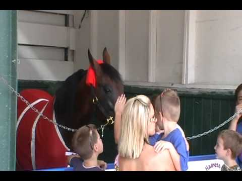 Back to the Track (Talking Horse).wmv