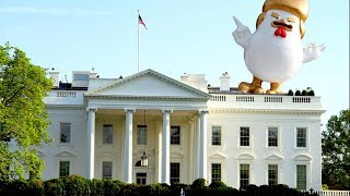 PROTEST: Massive, Inflatable chicken with President Donald Trump-like hair outside the White House 2017 Video
