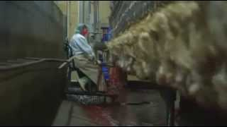 meat factory work must watch and share