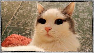 Чем кормить кошек? Чем нельзя кормить кошек и котят и как и чем правильно кормить котят и кошек