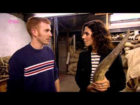 BBC Kill It Cut It Use It 1of5 Cow PDTV x264 AAC MVGroup org