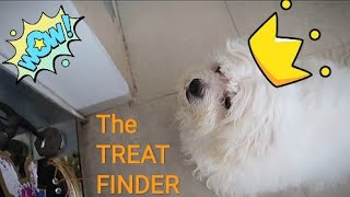 "The DETECTIVE Dog ""CHERRY"" 