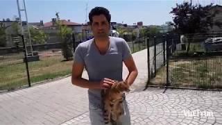Görmeyen Kediyi Veterinere Götürdüm