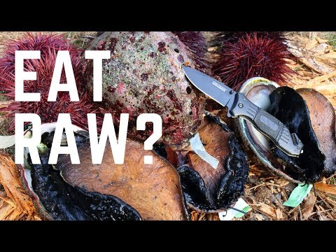 Catch and Cook: GIANT SEA SNAIL and RAW Sea Urchin GONADS!