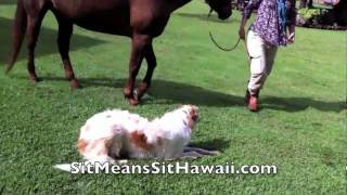 Two Unlikely Ranch Dogs Learn Some Safety Skills Around Horses
