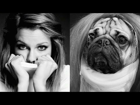 If Taylor Swift Had A Pug, He Would Look Like This!