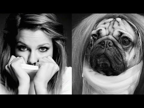Thumbnail Doug the Pug Recreates Taylor Swift's Instagram