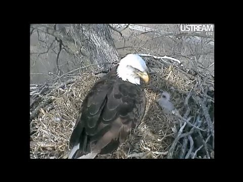 Decorah Eagles Unfortunate Situation Resolved! 4-3-11