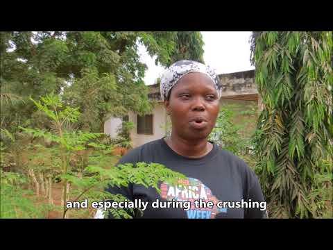 Togo: Moringa, Tree of Life - Kinomé