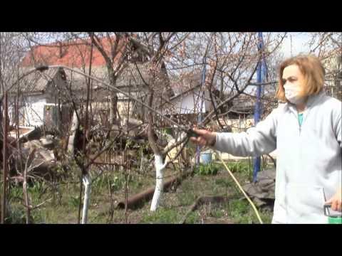 Железный купорос – применение в садоводстве.