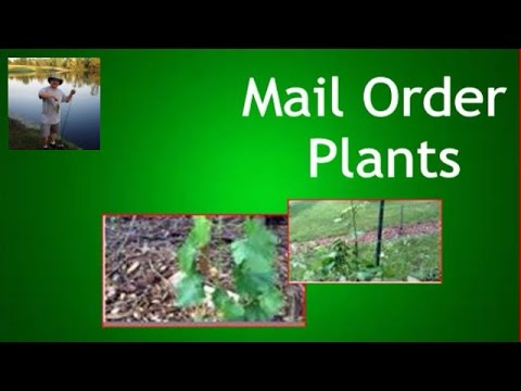 What you get- Mail order grape vines and fruit trees
