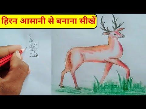 हिरन-का-चित्र-बनाना-सीखें-  -how-to-draw-deer-easy-drawing-for-kids