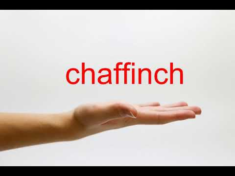 How to Pronounce chaffinch - American English