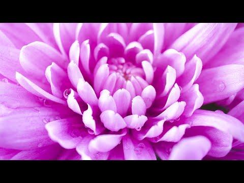 Enhance Positive Energy | 432Hz Healing Frequency | Mindfulness Meditation For Inner Peace | Detox