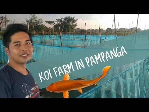 KOI Farm in Pampanga