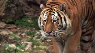Passion Animale : Vétérinaire en Parc zoologique