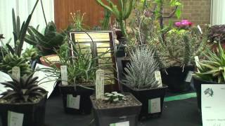 Spring Show 2012. Display and Competition plants