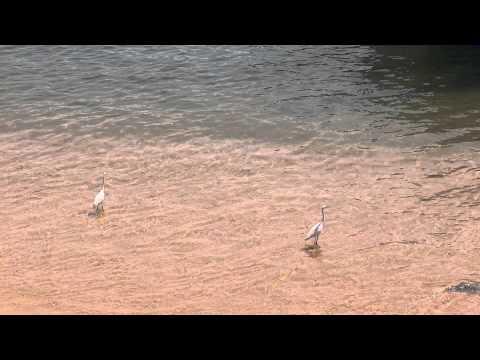 Cranes in sea