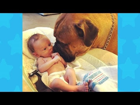 Friendly Dog meeting Newborn baby for the first time   Dog loves Baby Compilation