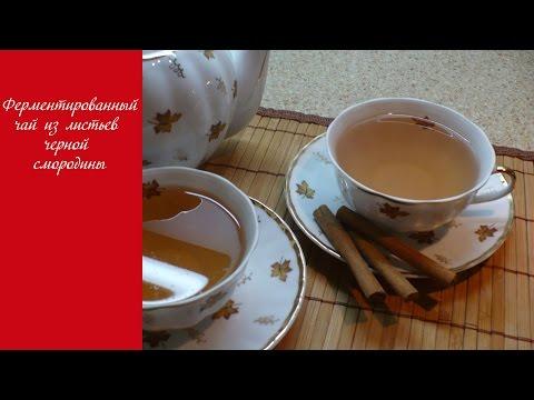 Ферментированный чай из листьев черной смородины. Ароматный чай в домашних условиях