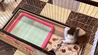 子犬と子猫のプロレスごっこ♪ thumbnail
