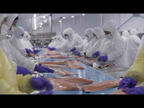 Chilean Salmon Industry Faces Opposition From Environmentalists