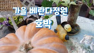 분갈이 하는 날/가을 베란다정원/호박